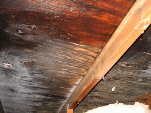 Black growth on roof sheathing in attic. We<br>would advise you to call a mold specialist<br>to review, test.